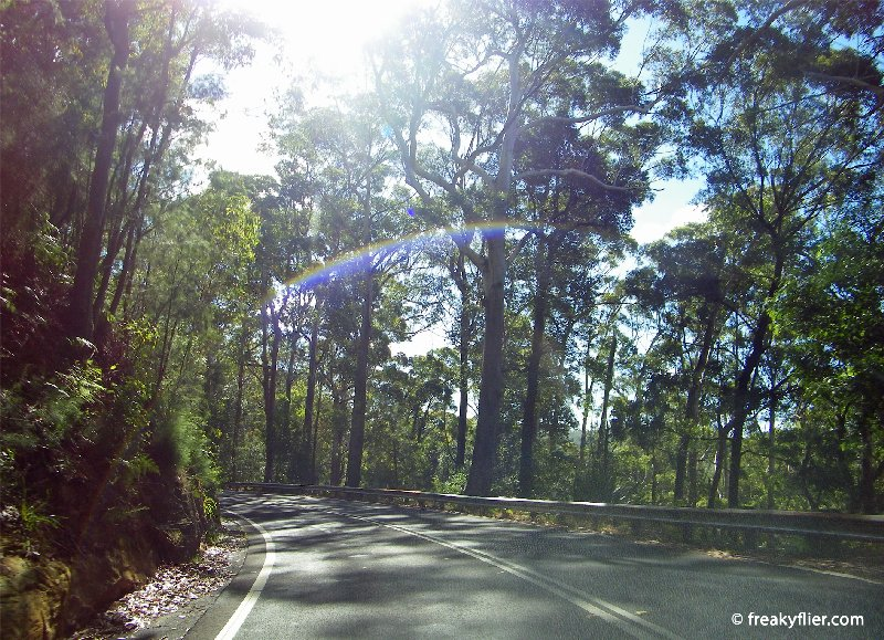 Driving through the Royal National Park