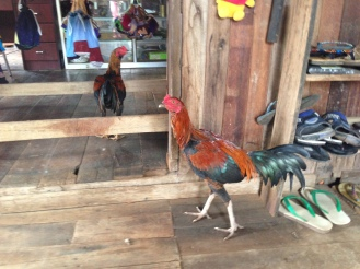 Rooster at Village Markets